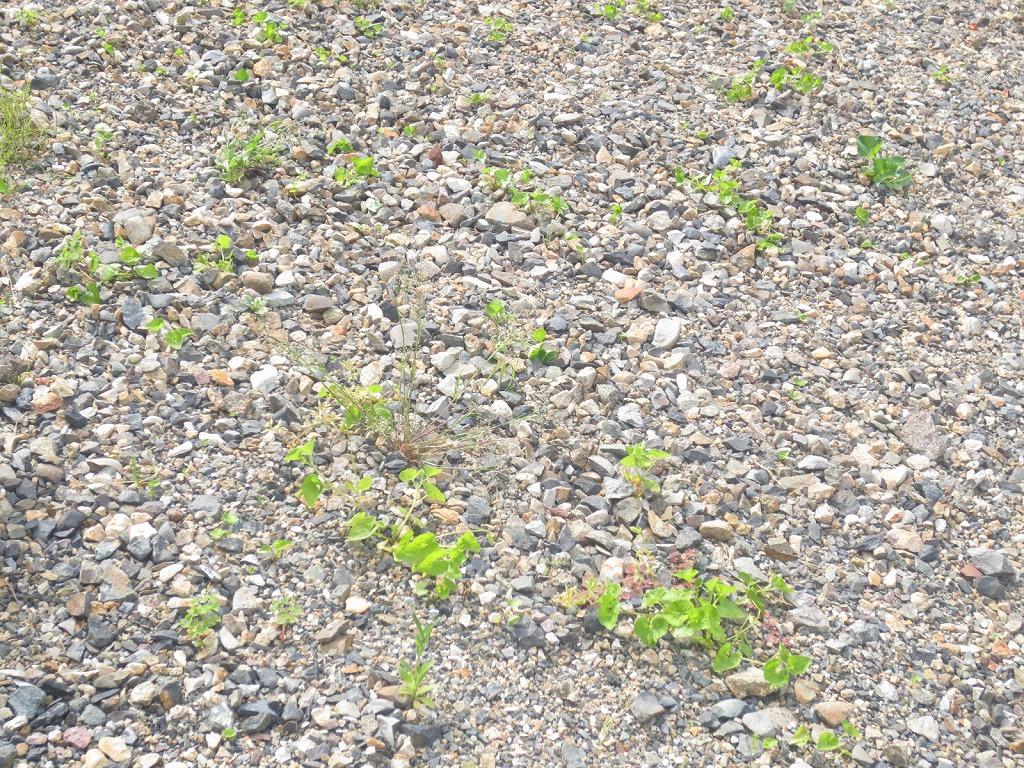 生え ない が 土 雑草